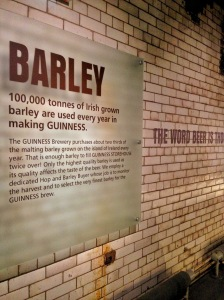 Barley, Guinness Factory, Dublin