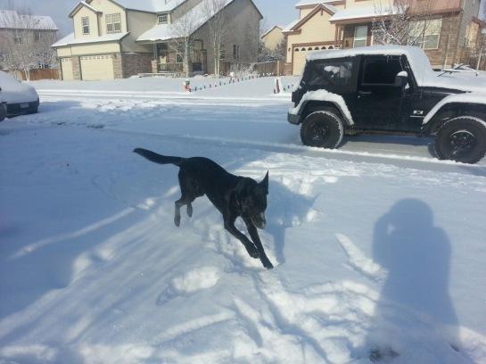 Nala in the snow
