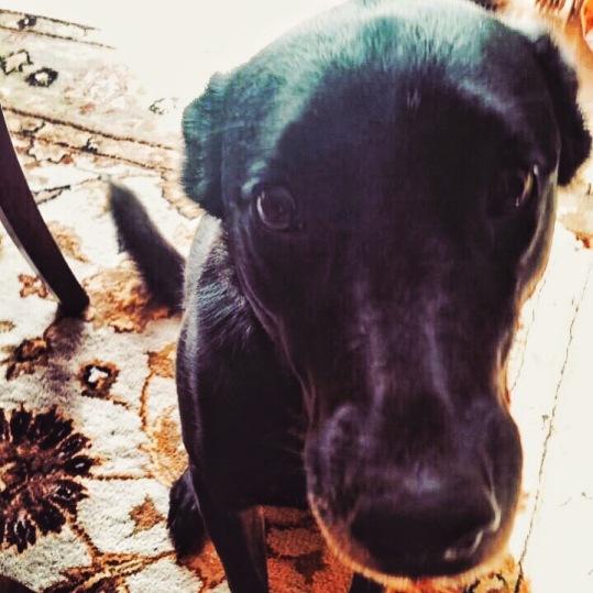 dog begging for attention